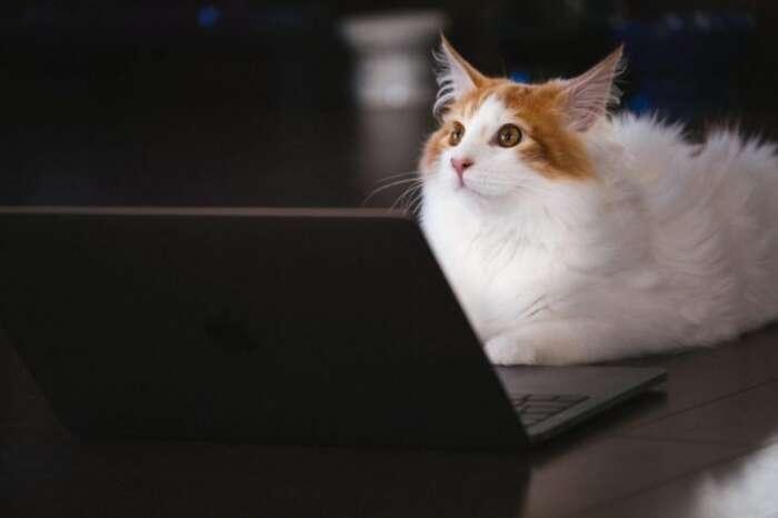 パソコンで出来る事はなに?の記事を読む猫