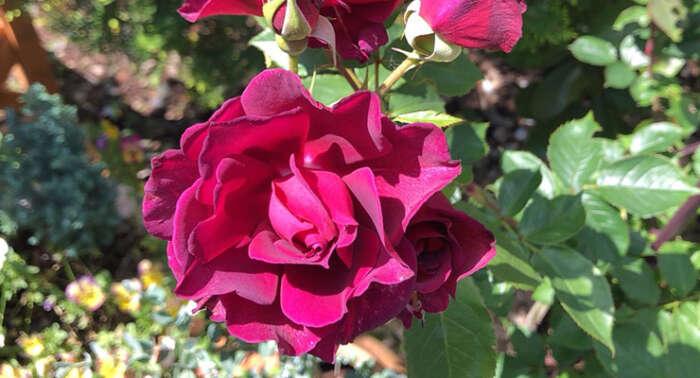 バラを育てるのに必要な道具リスト