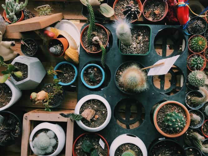 多肉植物を屋外で育てたい