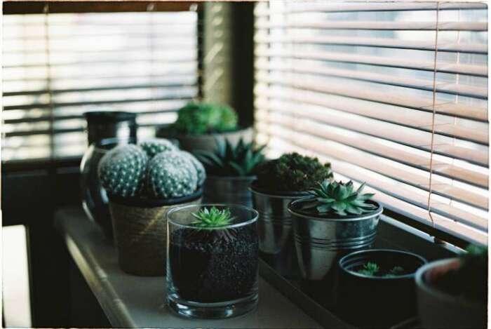 多肉植物を室内で育てるには