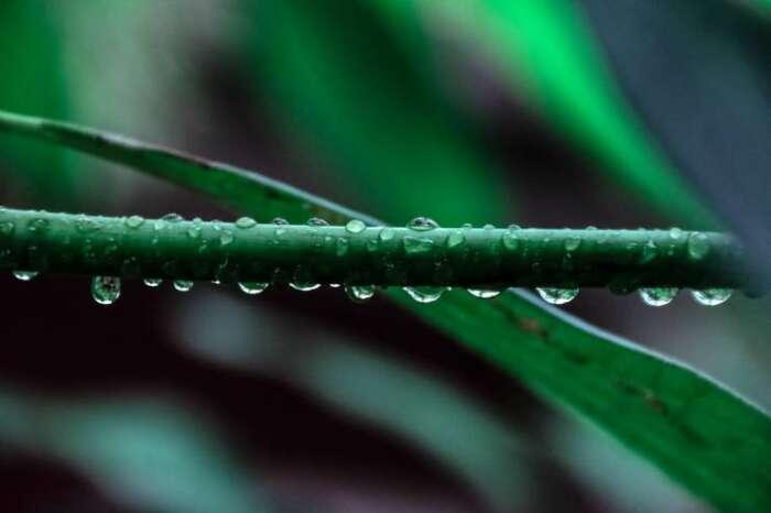 多肉植物は水やりの手間が少ない