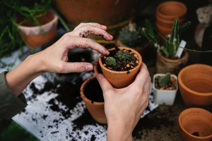 多肉植物を育てるには野外か室内か