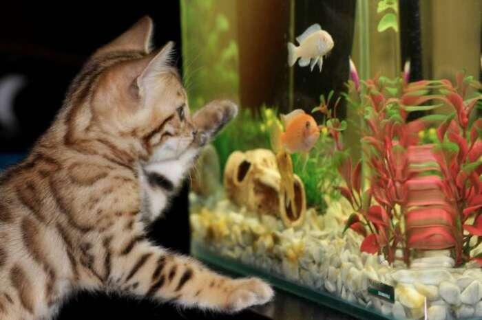 アパート・マンションで水槽を使って飼育する生物を飼う時の注意点