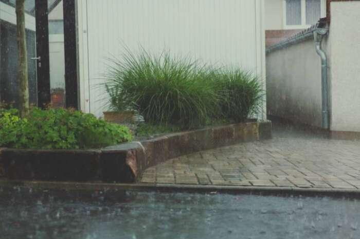 植物を台風や暴風雨から守る為の4つの対策方法【屋外の植物を守ろう!】