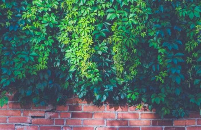 植物が倒れない様に壁に近づける