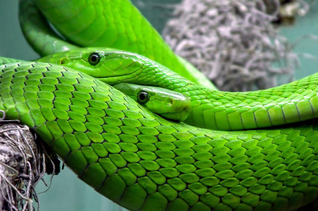 爬虫類はアパートやマンションでも飼育できるペット