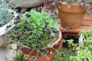 フリー写真素材植物 その1