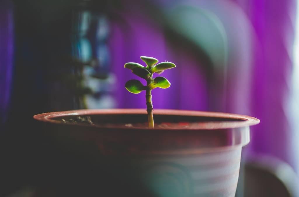 植物の原種、実生、ハイブリッドってなに?【まとめ】