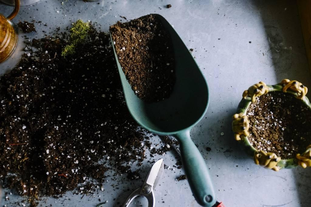 ミントの栽培を始めるのに必要な物