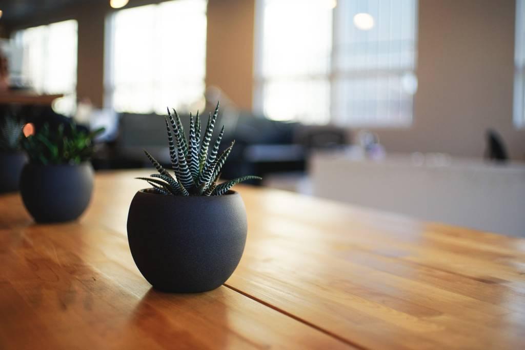 植物の原種、実生、ハイブリッドってなに?【何気によく聞く些細な事】