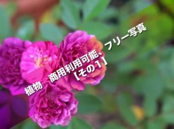 植物 商用利用可能、フリー写真【その1】