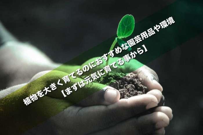 植物を大きく育てるのにおすすめな園芸用品や環境【まずは元気に育てる事から】