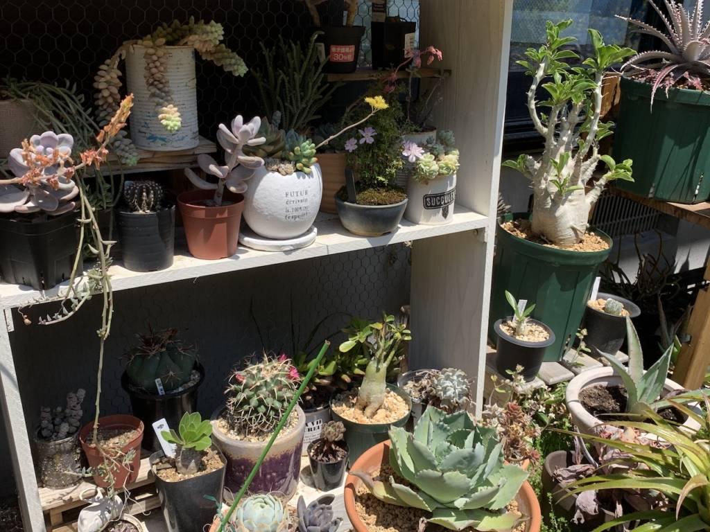 マンションやアパートで植物を楽しむ方法【まとめ】