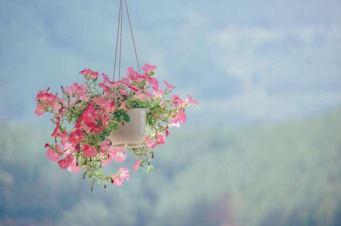 植物を吊るす方法と場所の紹介【まとめ】