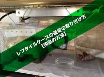 レプタイルケースの暖突の取り付け方【保温の方法】