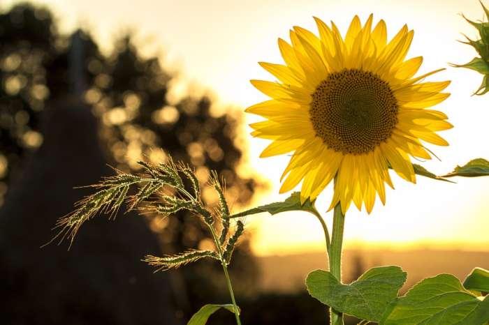 植物の野外の暑さ対策方法【まとめ】