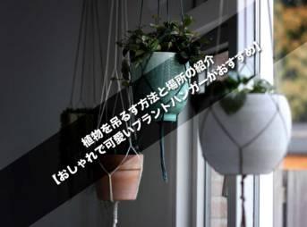 植物を吊るす方法と場所の紹介【おしゃれで可愛いプラントハンガーがおすすめ】