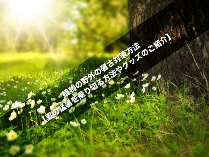 植物の野外の暑さ対策方法【夏の猛暑を乗り切る方法やグッズのご紹介】