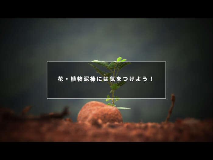 花・植物泥棒には気をつけよう!【庭先の植物でもお金にもなるんです!】