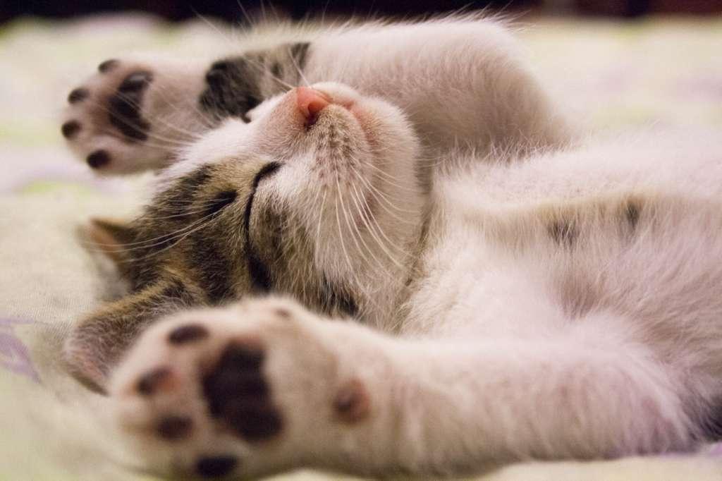 寝る時のスマホの距離は直ぐ手に取れる所じゃない方がいいです【まとめ】