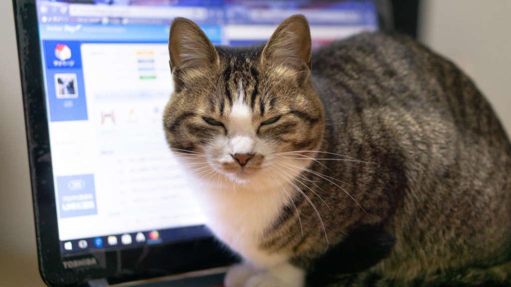 パソコン購入時に『Office』ってなんやねん!!と思った人は見てください!【まとめ】