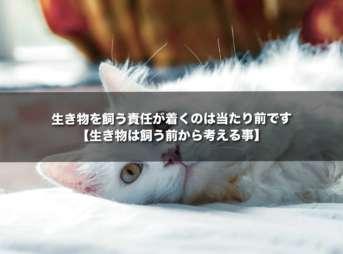 生き物を飼う責任が着くのは当たり前です【生き物は飼う前から考える事】