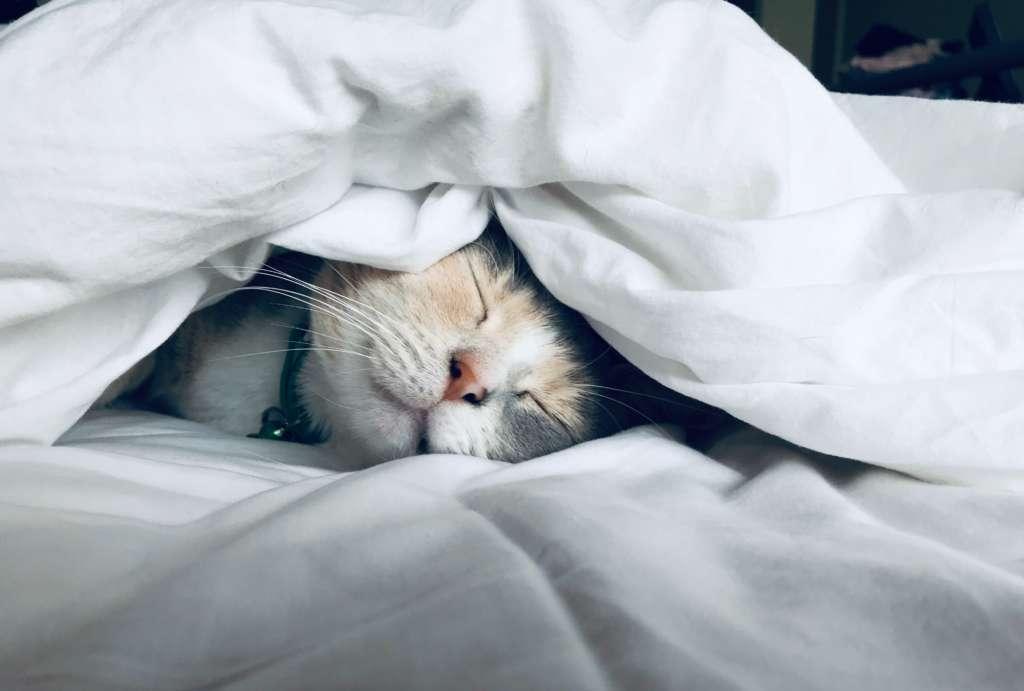 休日は寝てるだけと言う人は実は危険かもしれない【寝てるしか気力がない時】