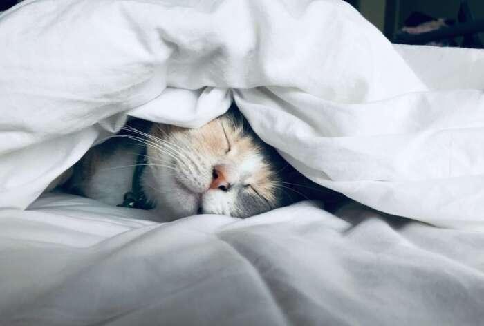 夜寝れないのであれば生活習慣を見直せ【まとめ】