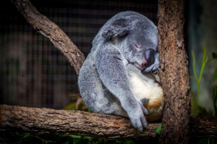 休日に眠い時は、そんな時もあると思って寝る【人間は未完成です】
