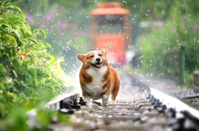 雨の日は何もしたくない、そんな日もあるさって思う【まとめ】